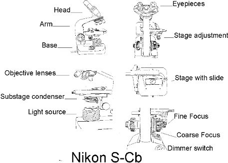 Figure 1 typical components of a bright field microscope